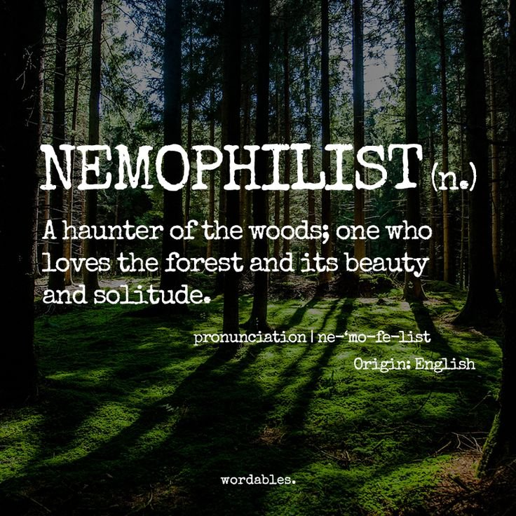 Nemophilist arlene ambrose 10 words every empath needs to know